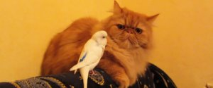 BIRDS ANNOYING CATS