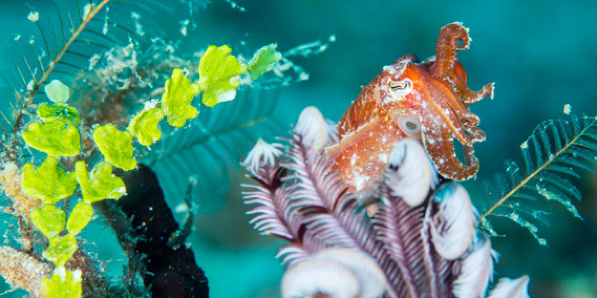 コブシメの目は口ほどに物言わぬ シェア ツイート  パプアニューギニア・ 古見きゅう 連載第9弾