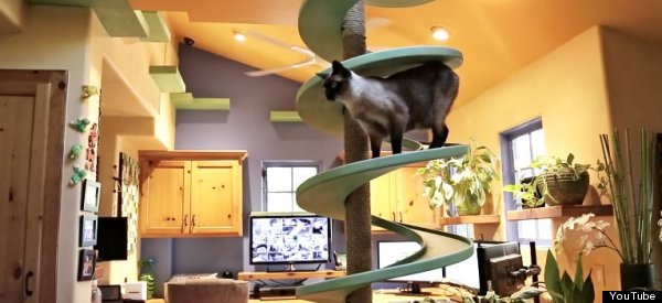 Man Transforms His Home Into A Playground For His Cats