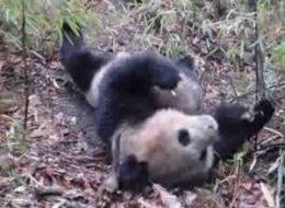 ZooFari At National Zoo: HuffPost DC Top 5 For May 17, 2012