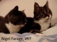Two Talking Cats Discuss Ukip