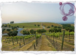 A Fantastic Voyage To Northern California's Wine Country
