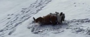 DOG SNOW ANGEL