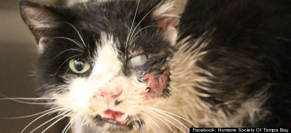 'Zombie Cat' Claws Way Out Of Grave And Into Our Hearts