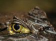 Little Pet 'Lizard' Was Not What Boy Thought