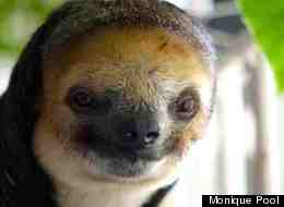 Extraordinatory Photos And Story of Potty-Trained Sloth