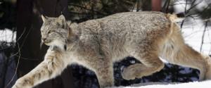 Endangered Species Canada