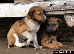 11 λόγοι για να υιοθετήσετε ένα αδέσποτο ζώο