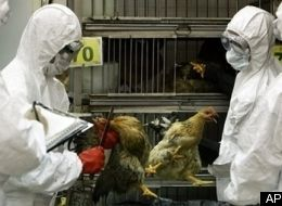 Hong Kong Bird Flu