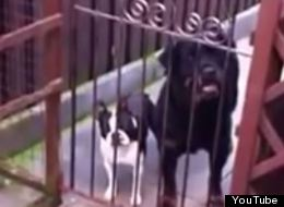 This Dog's Bark Sounds Exactly Like It's Saying 'Hello'