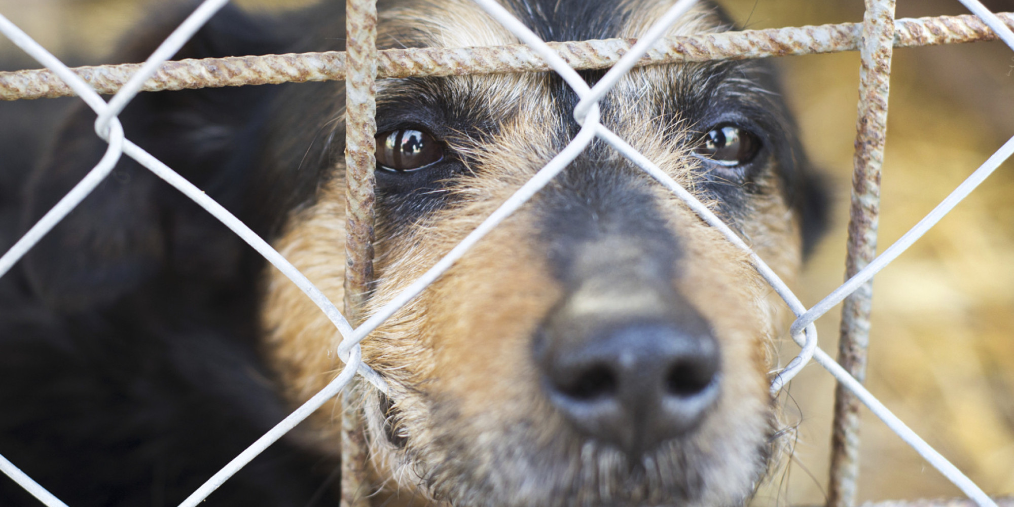 How Many Dogs Get Abandoned Every Year In The Uk