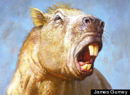 Giant Prehistoric Rodent's Titanic Teeth Weren't Just For Biting