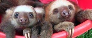 Sloth Magic