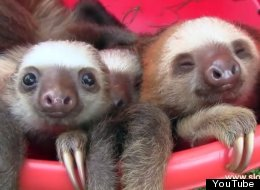 Sloths Are 'Magical' Creatures. Here's Definitive Proof