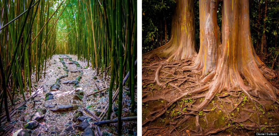 rainbow eucalyptus duo