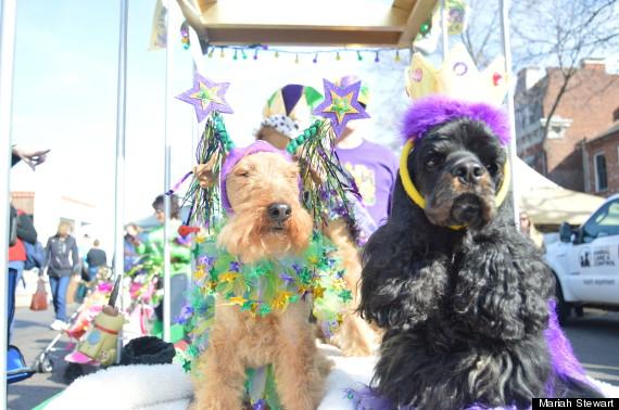 dogs on mardi gras