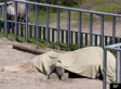 Kiev Zoo Under Fire For Shocking Number Of Animal Deaths And Disappearances (PHOTOS)