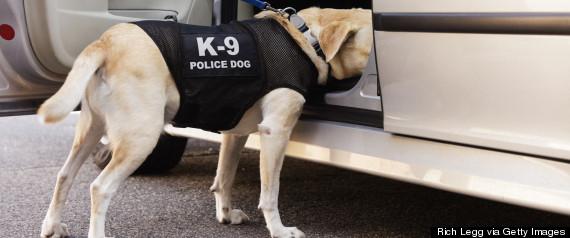 police dog car search