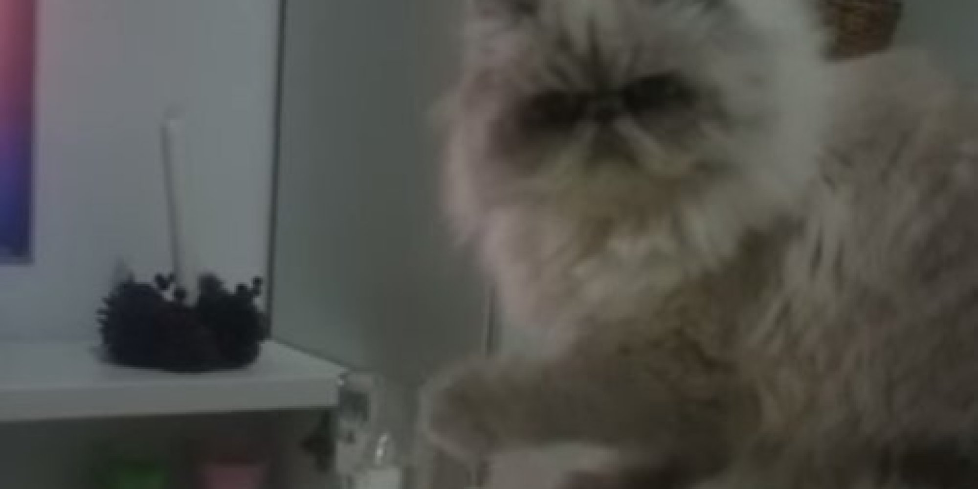 Jerk Cat Doesn't Give Two Hoots About You, Or That Glass ...