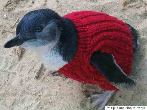 penguin in tiny sweater
