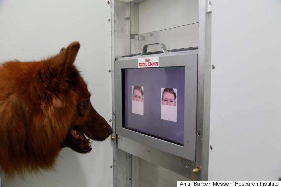 dogs read faces