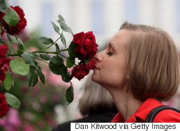 What Makes A Rose Smell So Sweet? Here's The Science