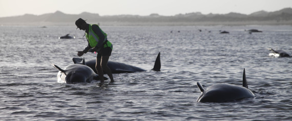 NEW ZEALAND WHALE 2015