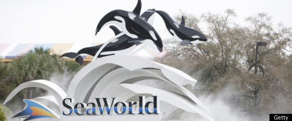 Tilikum The Whale Seaworld