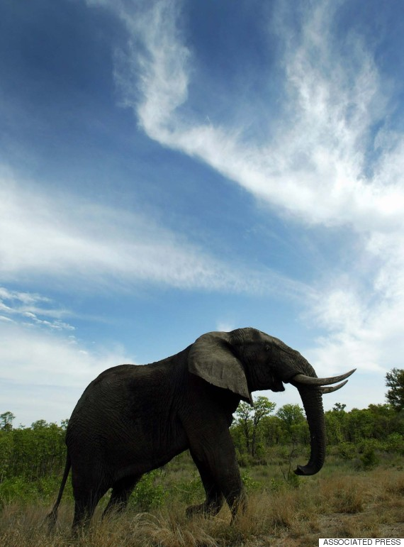 elephant zimbabe