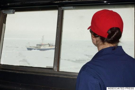 antarctic chieftain