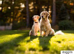 «Doggrin»: Η υπηρεσία που θα βοηθήσει τον σκύλο σας να βρει το άλλο του μισό