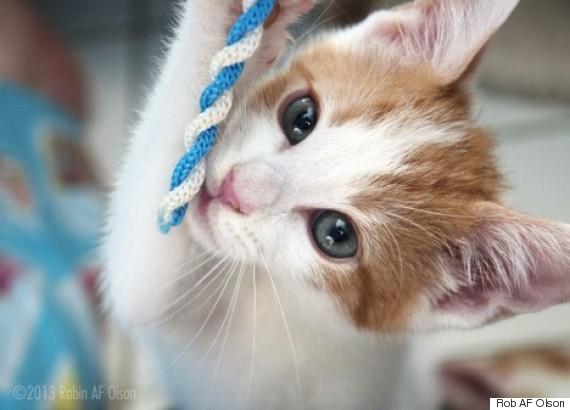 rob af olson kitty