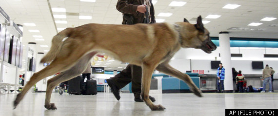 MAN BARKING AT POLICE DOG