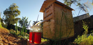 Sweet Invention Serves Honey On Tap, Straight From The Beehive