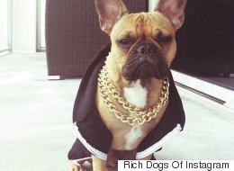 #RichDogsOfInstagram Has Us Weeping About Our Own Lifestyle