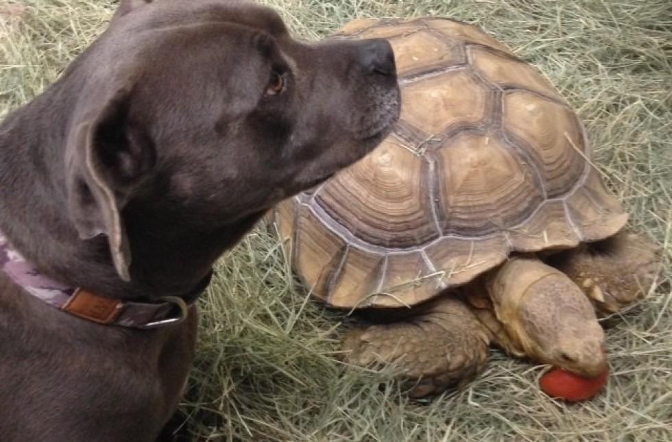 dog and tortoise