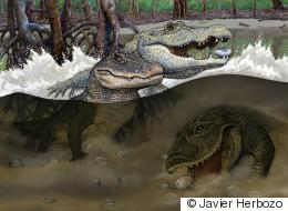 Bonanza Of Ancient Crocs Unearthed Overseas