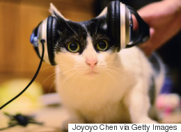 Scientists Create Music For Cats, And Fur A Good Reason