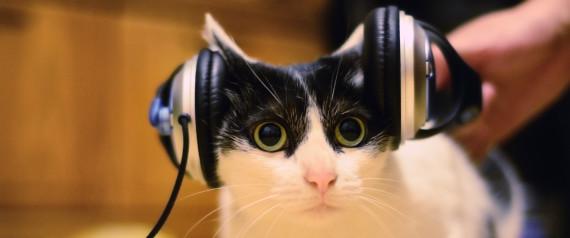 CAT LISTENING MUSIC