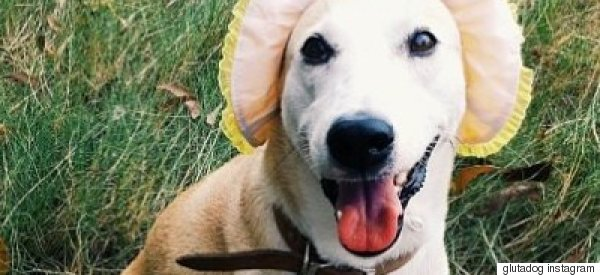 Meet Gluta, The Happiest Dog In The World Who Overcame Cancer