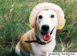 Meet Gluta, The Rescue Dog Who Overcame Cancer To Become 'The Happiest Dog In The World'