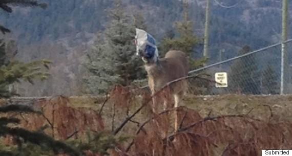 deer in bag