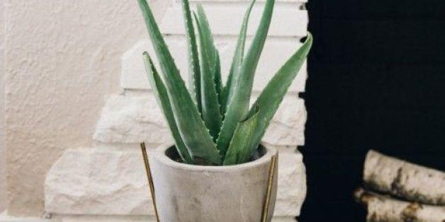 The Best Low Maintenance Indoor Plants