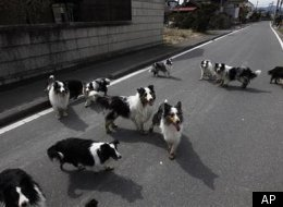 Japan Dogs Saved