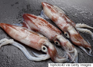 Damp Squid