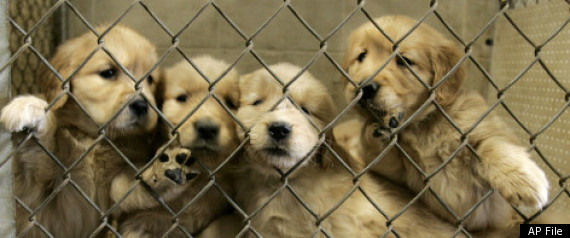 Missouri Puppy Mill Law