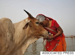VHP Is Pushing The Modi Government To Create A Cow Protection  Ministry