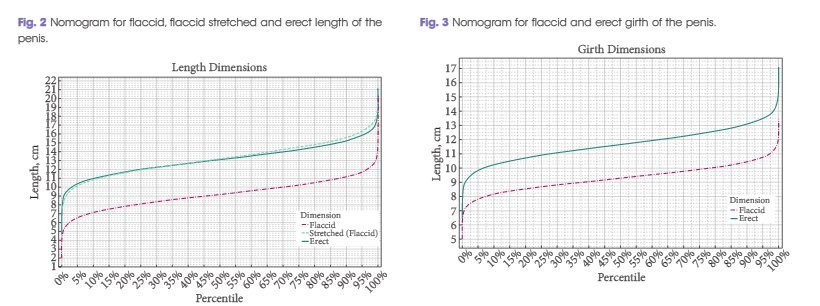Comment mesurer son pnis : Taille et circonfrence