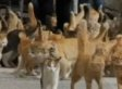 On Cat Island, Cats Outnumber Humans 6 To 1