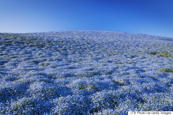 Hitachinaka S Hitachi Seaside Park Is The Springtime